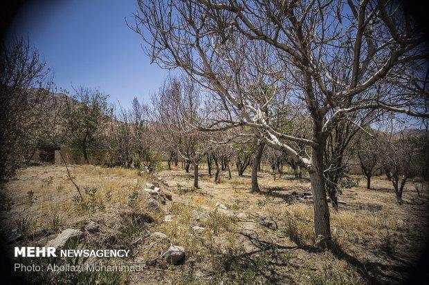 باغات بام ایران در حال خشک شدن، آب دهی قنات ها 60 درصد کاهش یافت