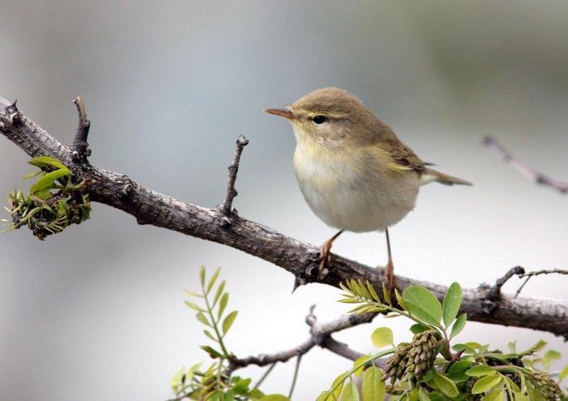 ثبت 2 گونه پرنده جدید در تالاب بین المللی گندمان
