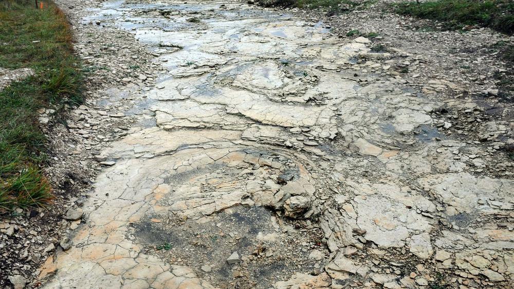 بزرگترین ردپای به جا مانده از دایناسورها در جهان