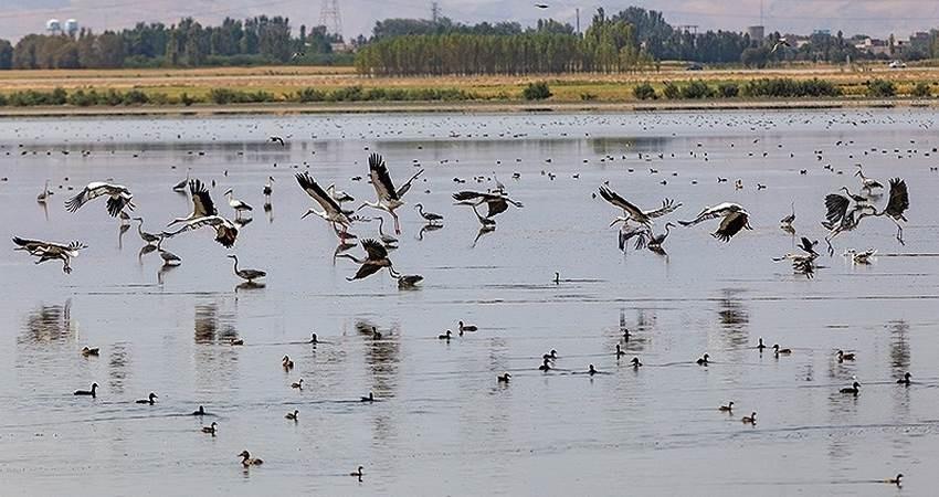 بهشت پرندگان ایران کجاست؟