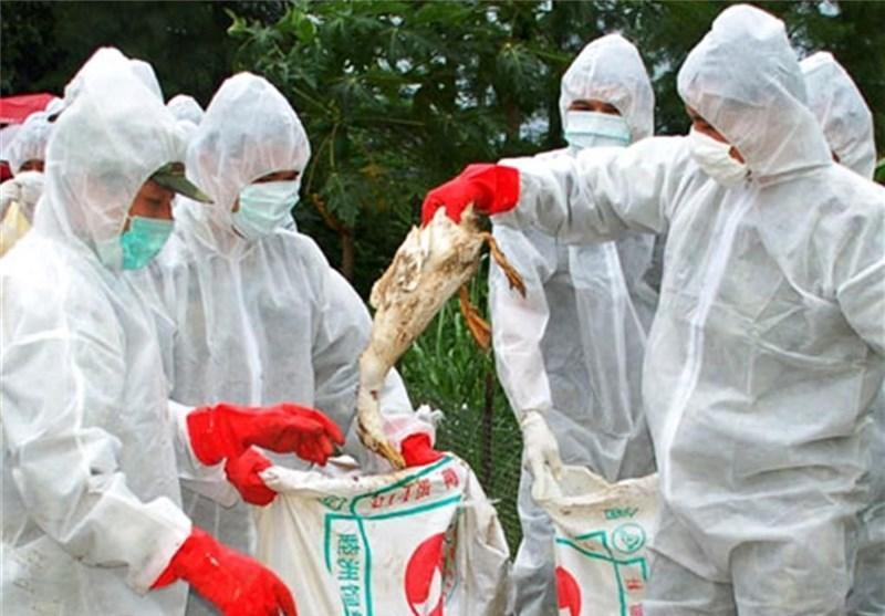 گزارش دو مورد دیگر از ابتلا به ویروس جدید آنفولانزای پرندگان در چین