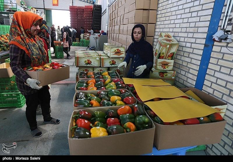 افزایش حجم صادرات و ترانسفر محصولات کشاورزی هرمزگان از عمان