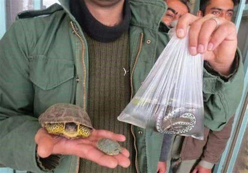خبرنگاران ممنوعیت خرید و فروش برخی گونه های جانوری در ایام پایانی سال
