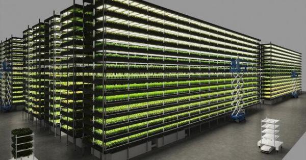 ساخت یک مزرعه عمودی در دانمارک با توان تامین همه نیاز سبزیجات کشور