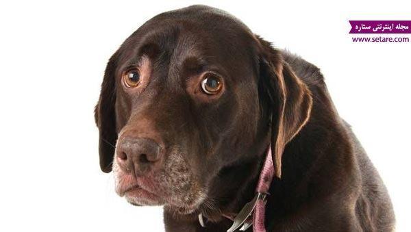 سگ های خانگی از کدام کار انسان ها متنفرند؟