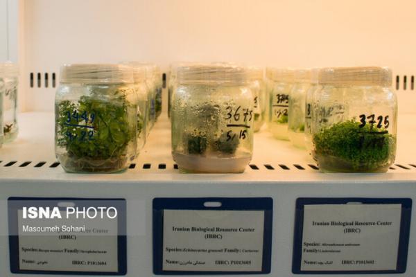 روشی برای نگهداری چند صدساله نمونه های گیاهی