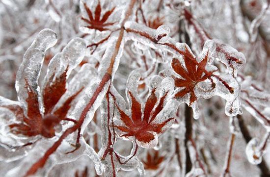 کانادا در محاصره سرما و یخبندان